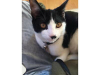 Good home needed for lovely affectionate cat