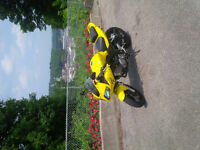 Clean SV650 very well maintained Low Km's