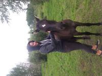 LLCIP Ponies Rare Breeds Canada