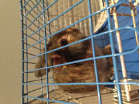 Rabbit in need of a good home
