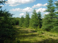 A Lovely Waterfront Lot with Access to Bras d'Or Lake, Canada