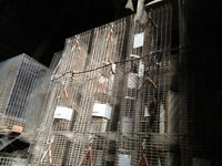 Chinchilla cages for sale