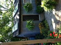 Locke Street Charming Cottage