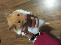 One month cute hamster for sale