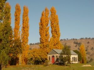 My Shed for removal Tallangatta Valley Towong Area Preview