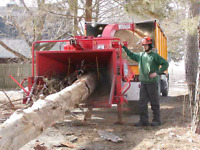 TREE REMOVAL SERVICES IN GTA 647-558-1366