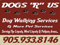 Dog Walking Services & More