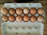 Pasture-Raised, Organic, Free-Range Eggs