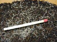 Grow your own fish food! Grindal worms