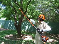 Fall Clean-up - Tree Service - Gutter Cleaning