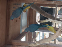 Large quanity of birds for sale