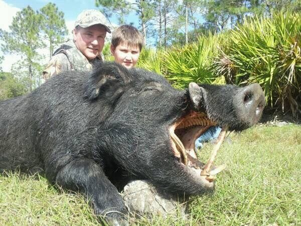 WILD BOAR HUNT IN FLORIDA  GUIDED!