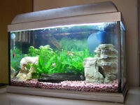 FREE - 30 litre fish tank, includes 1 small catfish