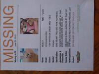 LOST CHIHUAHUA IN CAMPBELL RIVER SHELTER BAY AREA