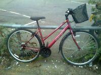 Apollo - city hybrid road bike in great condition (FREE PUMP, LOCK & LIGHTS)