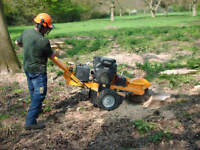 Expert Stump Removal / Stump Grinding Service