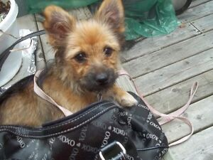 URGENT!DESPERATE NEED OF HELP FOR FAMILYS BELOVED PUPPY ROXY!