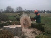 TREES WANTED FOR LOG BURNER………………Posting for 5 + years