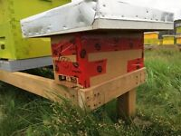 Honey Bee Nucleus Hives for 2016