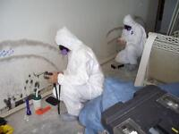 Attic Mold Remediation Experts / Toxic Black Mold Removal