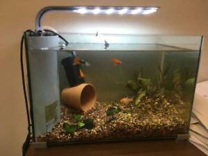 5 Gal tank with accessories and fish (Coquitlam central mall)