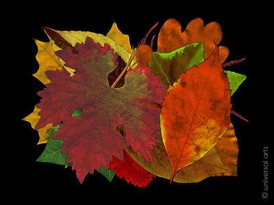 MARIO STRACK -  Leaves 3 limitiert Grafik Original signiert Druck Kunst Bilder
