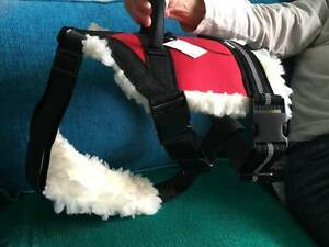 Active Dogs pulling harness for med-large dog