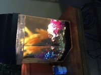 Beautiful 5 gallon hexagon fish tank , EVERYTHING INCLUDED