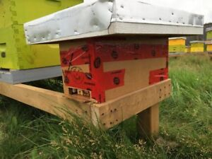 Nucleus Hives - Spring 2018