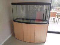 Fluval aquarium tank and contents. 3 ft bow fronted, on cabinet. complete set up.