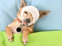 Pet First Aid Course by Walks 'N' Wags