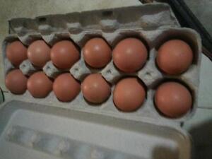 Eggs Free Range Brown Fresh Eggs Natural Grain Fed No Chemicals