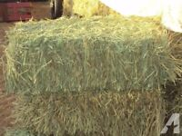 small hay and staw bales wanted, cash paid