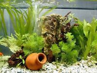 Wanted Any Aquarium accessories including stands, aquariums ects