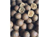 Carp fishing boilies (freezer baits)