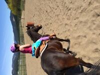 Western riding lessons available