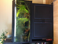 60 gallon fish tank with black stand and lots of accessories