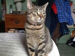 MISSING/LOST CAT, SIMBA
