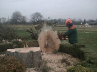 TREES WANTED FOR LOG BURNER………………Posting for 6 + years