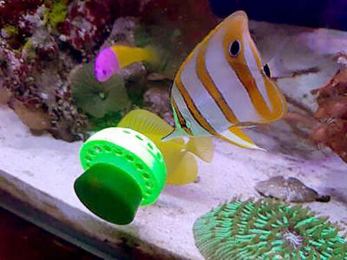Marine Aquarium Fish Feeder for Frozen Food Artemia Mysis