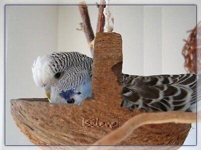 Kokosschaukel - Originelles und praktisches Vogelspielzeug. Der Renner !
