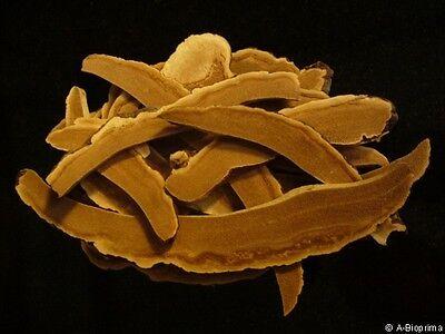 Ganoderma Lucidum Reishi (100 %  gemahlene Bio Reishi-Pilz (Ganoderma lucidum) 100 Gramm)