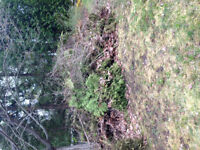 Need Bush Removed from property