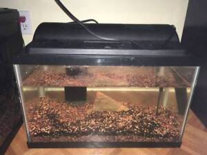 Complete set of 10 Gal with 1 breeding pair of Red Jewel (New We