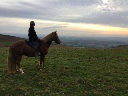 Seeking Horse Work Table Top Greater Hume Area Preview