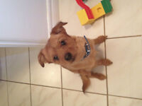 very cute and sweet dog need a home due to allergies