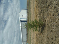 Wild White & Black Spruce Trees for Sale