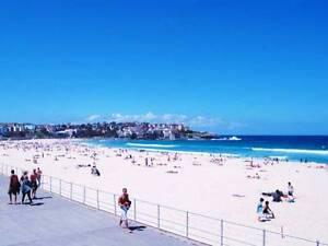 Wanted international male for Bondi Beach flat North Bondi Eastern Suburbs Preview