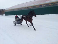 INVESTORS WANTED Standardbred Harness Racing Track Race Horse