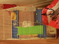 Hamster for Sale WITH CAGE AND FOOD